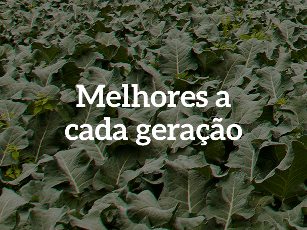 Brócolis Seminis